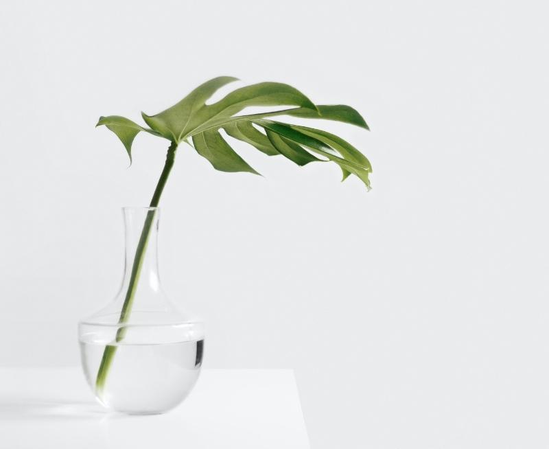 ChiroCliniqueZenith-tarifs-image1-plante